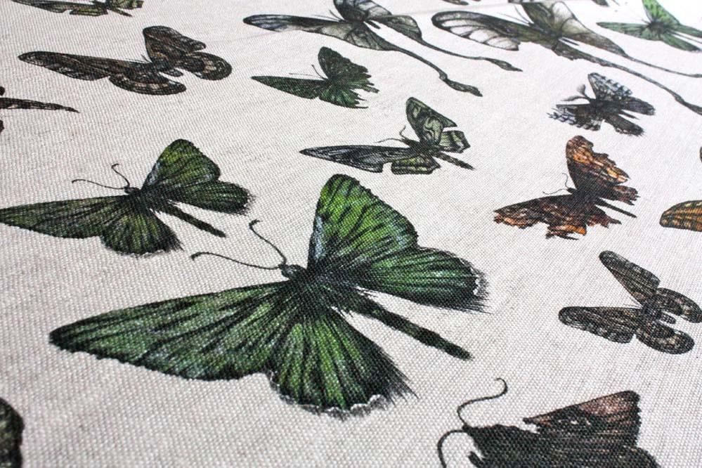 Entomologie-Moths-Original-Close
